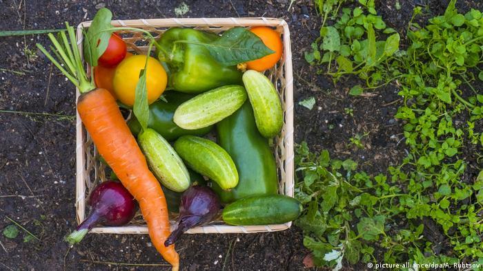 Closeup of basket of fresh vegetables on garden soil