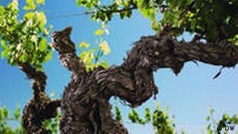 Wein im Barossa Valley