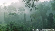 IDN, 2003: Tropischer Regenwald, Nebelwald. [en] Tropical rainforest. | IDN, 2003: Tropical rainforest. |