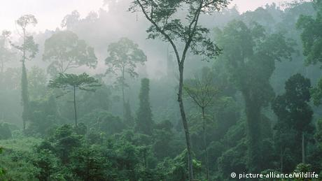Different trees in a rainforest