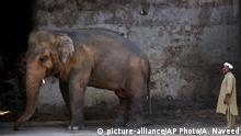 Pakistan Islamabad Zoo 2016 |Elefant Kaavan