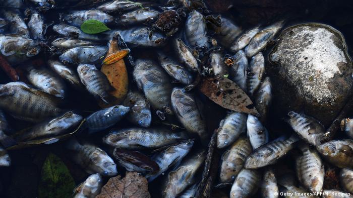 Foto simbólica de peces muertos en Honduras