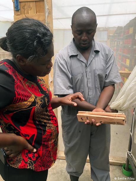 Frederick Kimathi Githua explica un dispositivo que usa para que las moscas soldado negras pongan sus huevos.