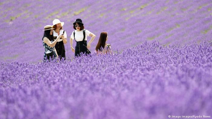 Da. Na fotografiji je polje lavande. Da. Na fotografiji su Japanci. Ne. Ovo nije Provansa u južnoj Francuskoj. Ne. Ovo nisu japanski turisti. Ovo su polja lavande u prefekturi Furano Hokaido, u Japanu i domicilno stanovništvo.