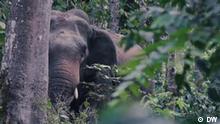 Global 3000 vom 27.07.2020 - Elefanten