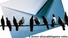Symbolbild-Brieftauben sitzen auf einer Stromleitung