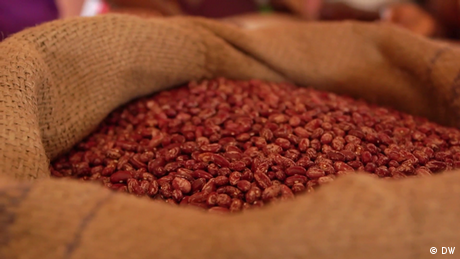 Eco Africa - Local farmers looking after their own seeds in Uganda