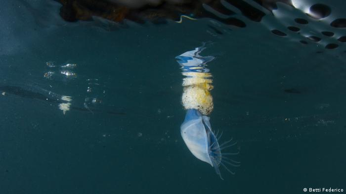 A blue and yellow creature floating on the surface of the water