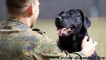 Deutschland Ulmen | Bundeswehr | Hunde im Einsatz