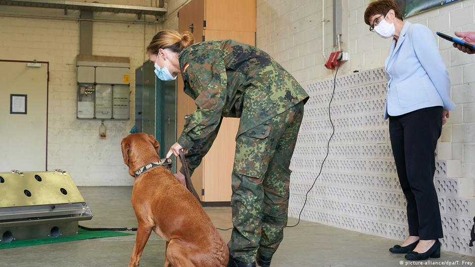 Dogs detect coronavirus fast and reliably — why not use them everywhere?