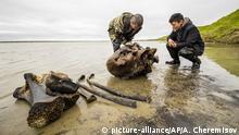 Russland I Yamalo-Nenets I Mammut-Fund im Pechevalavato See