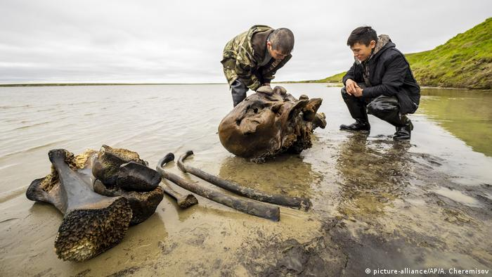 Two men study the fragment of a mammoth bone found in a lake in Siberia