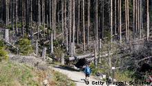 Deutschland geschädigte Laubbäumen