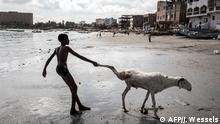 A young sheep farmer drags one of his sheep toward the sea in order to clean it in Dakar on July 28, 2020, ahead of the Muslim Eid al-Adha (Festival of Sacrifice), known as Tabaski in Western Africa. - Sheep farmers are starting to fill the streets of the Senegalese capital with their sheep ahead of the festival, when prices of their anmials can range from one hundred thousand West African Francs(CFA) to four million CFA (7000 US dollars). (Photo by JOHN WESSELS / AFP)