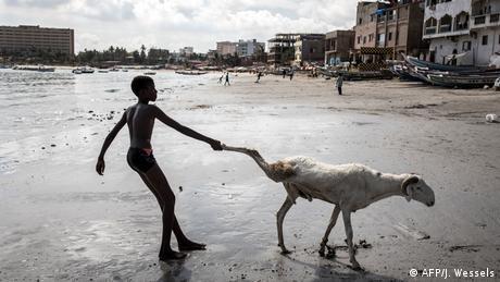 BdTD | Senegal Dakar | Eid al-Adha - Junger Schäfer zieht ein Schaf am Bein (AFP/J. Wessels)