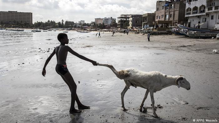 Un chico en Senegal tira de la pata de una oveja