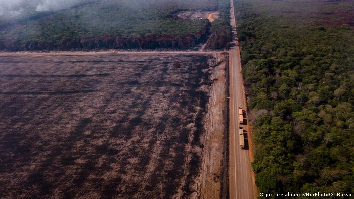 Overview of burnings in the vicinity of the BR-163 highway in northern Brazil, in the Amazon region