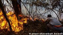 Brasilien Waldbränd