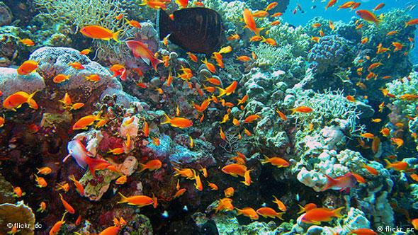 Fish in a Red Sea corals