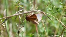 Deutschland Köln | Nabu-Stadtverband | Insektenzählung