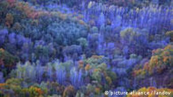 A forest near the capital Beijing
