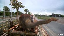Global 3000 Thailand Elefantenretten