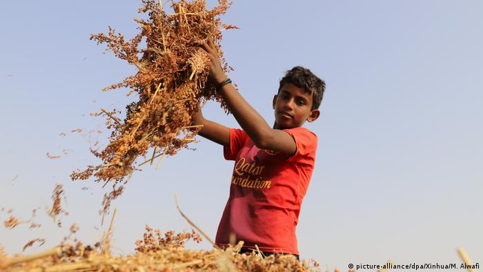 Jugendlicher Erntehelfer im Jemen (picture-alliance/dpa/Xinhua/M. Alwafi)