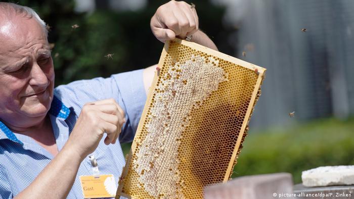 Председатель Берлинского союза пчеловодов Бенедикт Полашек (Benedikt Polaczek) демонстрирует прессе результаты работы парламентских пчел в этом сезоне