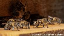 BdT Honig aus dem Bundestag