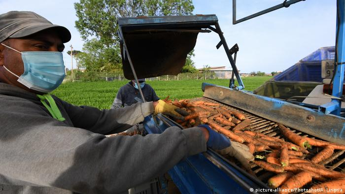 Сезонні працівників на сільському господарстві у ЄС