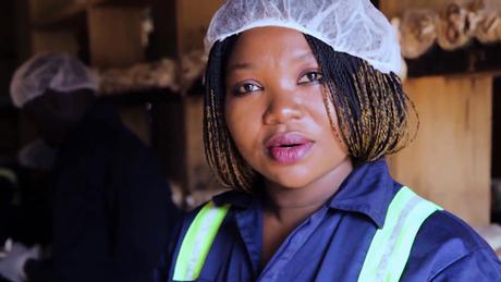 Eco Africa - Ghana's 'mushroom queen' grows her fungi in sawdust