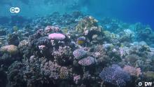DW Sendung Eco Africa Korallenriff