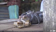 Nigeria I Markt I Krokodil