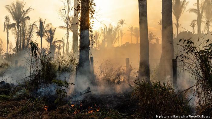 Plantas rasteiras de floresta pegam fogo