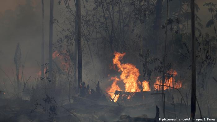 Fire burns along the road to Jacunda National Forest