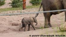 Elephant baby in Erfurt zoo