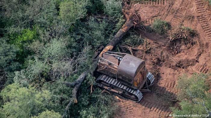 """Expansión de la frontera agrícola-ganadera en el norte de Argentina. La tierra es muy barata: cerca de 500 dólares la hectárea en la región del Gran Chaco, contra 15 o 20.000 en la región pampeana"""", señaló Hernán Giardini, de Greenpeace."""