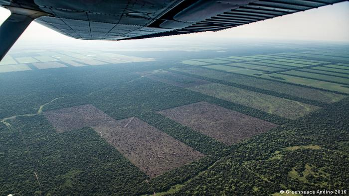 """Si seguimos demandando más carne barata sin pensar en los costos socioambientales, también somos corresponsables por la pérdida de bosque nativo en el Cono Sur"""", subrayó Ingrid Wehr, de la Fundación Heinrich Böll."""