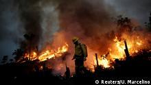 Brasilien Waldbrände Amazonas Regenwald