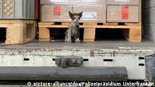 Deutschland BdT Katze aus Tunesien