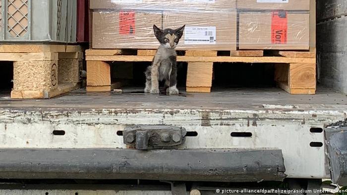 Фотография безбилетного кота для полицейской хроники