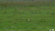 Saving Kenya's Ondiri wetland region