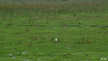 Eco Africa - Saving Kenya's Ondiri wetland region