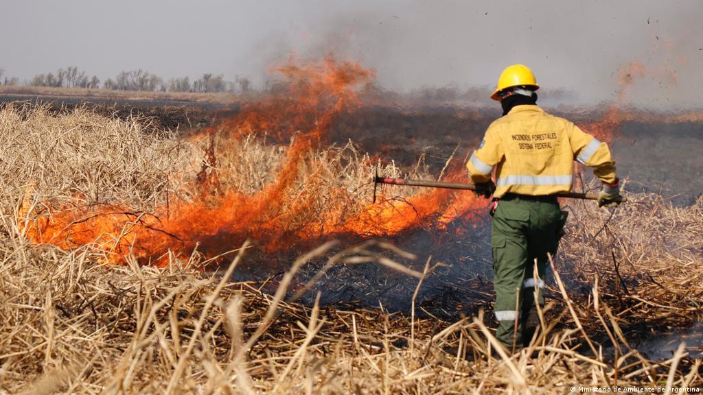 Incendios en el Delta del Paraná: el desmonte en Argentina no cesa    Ciencia y Ecología   DW   18.08.2020