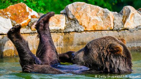 BdTD Kosovo Abkühlung im Bärenschutzgebiet (Getty Images/AFP/A. Nimani)