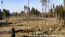 Deutschland Waldschäden