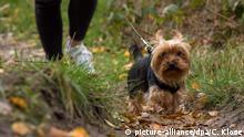 Symbolbild Hunde an der Leine Gassi gehen