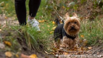 Женщина выгуливает собаку