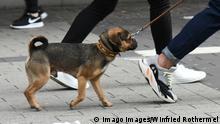 Mit Hund unterwegs in der Einkaufsmeile in Dortmund. *** With dog on the way in the shopping mile in Dortmund