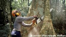 Brasilien Abholzung des Regenwaldes